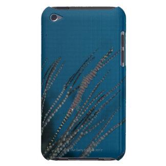 Needle shrimp (Tozeuma armatum) underwater iPod Touch Case