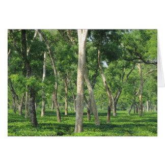 Neem Trees over the Tea Card