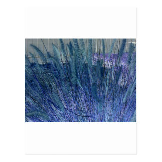 Negative Grasses Postcard