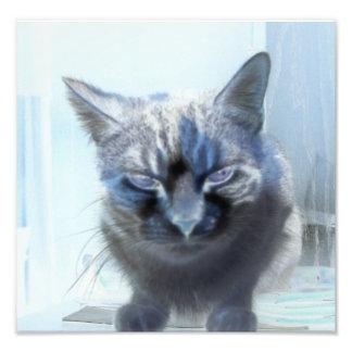 Negative Kitty Cat Photo Print