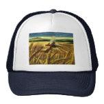 Negocio agrícola del vintage, trigo que cultiva la gorros