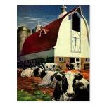 Negocio del vintage, vacas de leche de la granja tarjetas postales