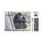 Negra Chimpanzee Stamps