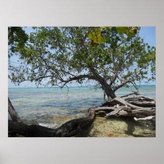 Negril Beach by Mangrove Tree Huge Canvas Print