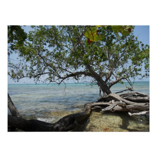 Negril Beach by Mangrove Tree Huge Canvas Print