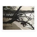 Negril Beach Post Card