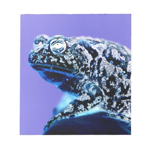 Negro azul invertido foto del sapo de la rana blocs de papel