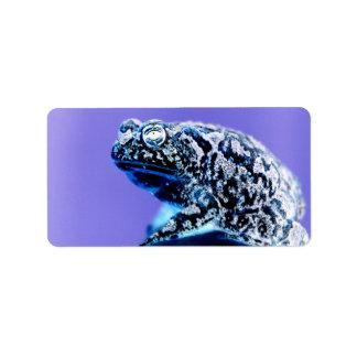 Negro azul invertido foto del sapo de la rana etiquetas de dirección