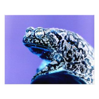 """Negro azul invertido foto del sapo de la rana folleto 8.5"""" x 11"""""""