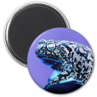 Negro azul invertido foto del sapo de la rana imán para frigorifico