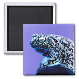 Negro azul invertido foto del sapo de la rana imanes de nevera