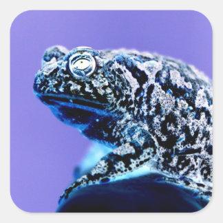 Negro azul invertido foto del sapo de la rana pegatina cuadrada