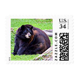 Negro del oso (AL, LA, nanómetro, WV) Timbre Postal