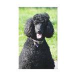 Negro del perro de caniche estándar, impresión de  lienzo envuelto para galerias