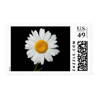 Negro floral de la flor de la margarita amarilla y estampillas