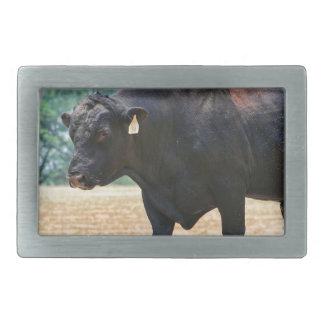 Negro grande Anqus Bull del muchacho Hebilla Cinturon Rectangular
