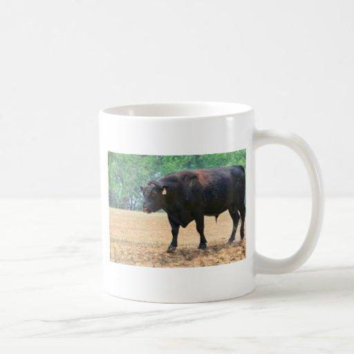 Negro grande Anqus Bull del muchacho Tazas
