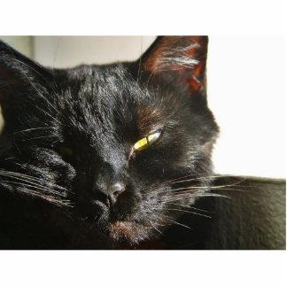 Negro peludo de las barbas de los ojos de gatos esculturas fotograficas
