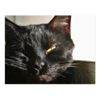 Negro peludo de las barbas de los ojos de gatos postal