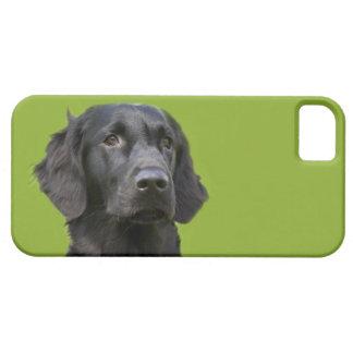 Negro revestido plano del perro del perro iPhone 5 protectores