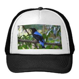 Negro y azul gorra