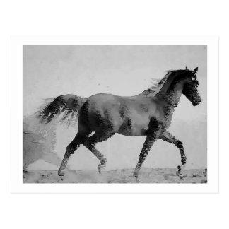 Negro y blanco del caballo que caminan postal