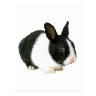 Negro y blanco del conejo de conejito postales