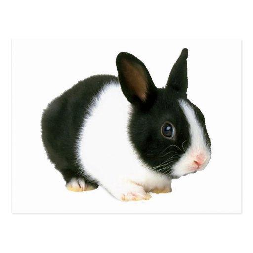 Negro y blanco del conejo de conejito postal