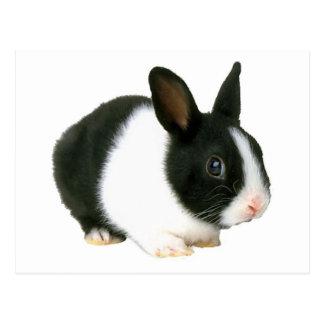 Negro y blanco del conejo de conejito tarjetas postales