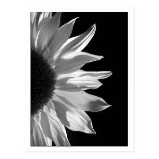 Negro y blanco del girasol tarjetas postales