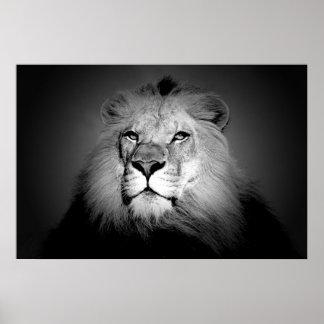 Negro y blanco/impresión del poster del león de BW