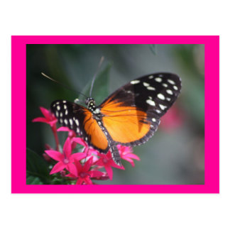 Negro y mariposa manchada naranja 2 postales