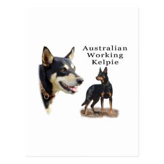Negro y moreno de trabajo del Kelpie de Aust Postal