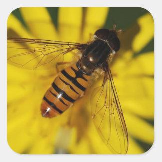 Negro y mosca anaranjada de la libración pegatina cuadrada