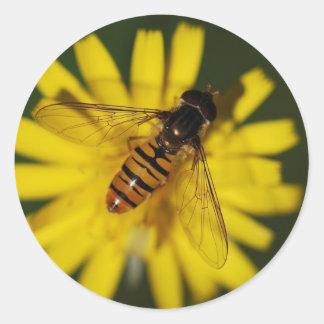 Negro y mosca anaranjada de la libración pegatina redonda