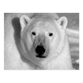Negro y oso polar de la pizca postal