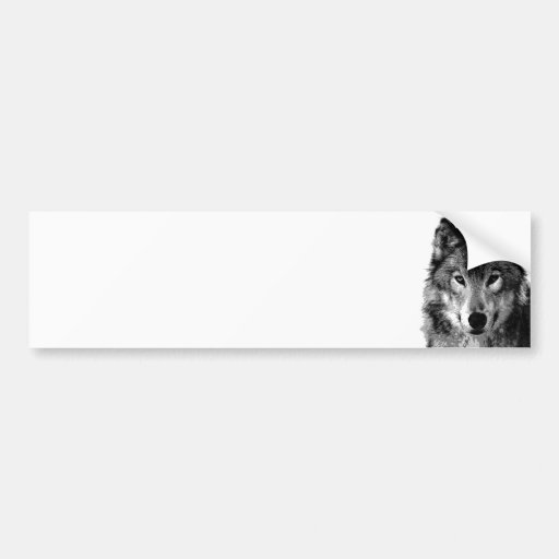 Negro y retrato de White Wolf Pegatina Para Auto