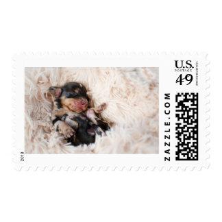 Negros y el moreno recién nacidos Dapple el Sello Postal