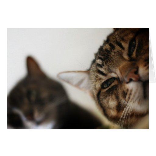 NEKOYASHIKI - Una casa por completo de gatos Felicitación