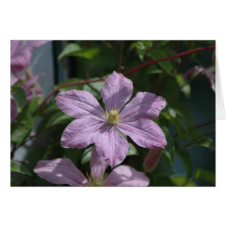 Nelly Moser Clematis 2009 Stationery Note Card