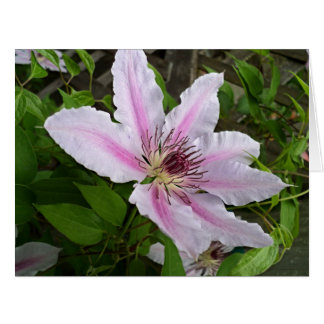 Nelly Moser Clematis 2016 Card