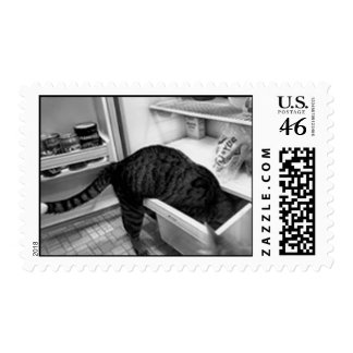 NELSON IN THE FRIDGE USPS STAMP