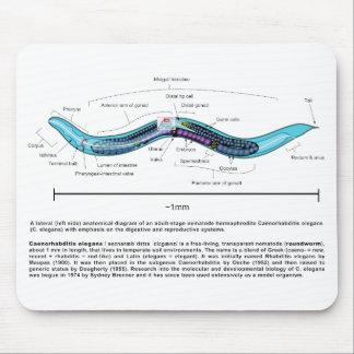 Nematode Roundworm Caenorhabditis Elegans Diagram Mouse Pad
