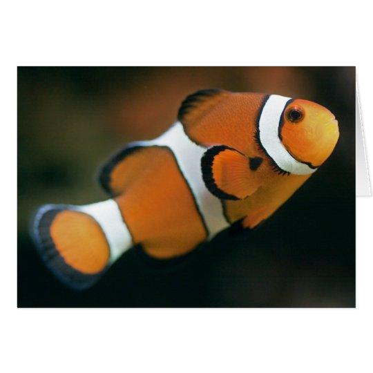 Nemo Card