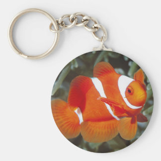 nemo clown fish keychain