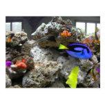 Nemo con su cuadrilla tarjeta postal