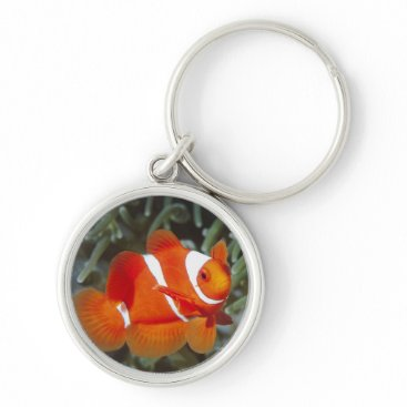 Beach Themed nemo fish keychain