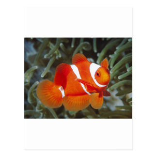 nemo fish postcard