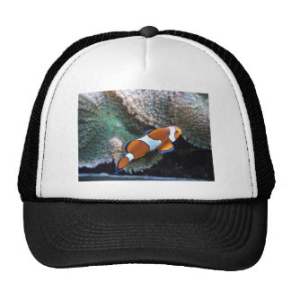 Nemo Trucker Hat