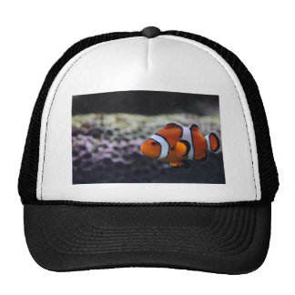 Nemo like cousin trucker hat